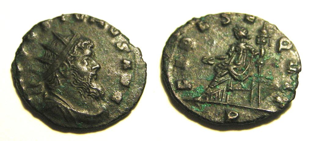 Aureolus Dscn3142