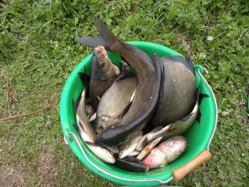 Carnet de pêche de Max62 Dscn8911