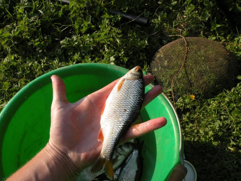 Carnet de pêche de Max62 Dscn8918