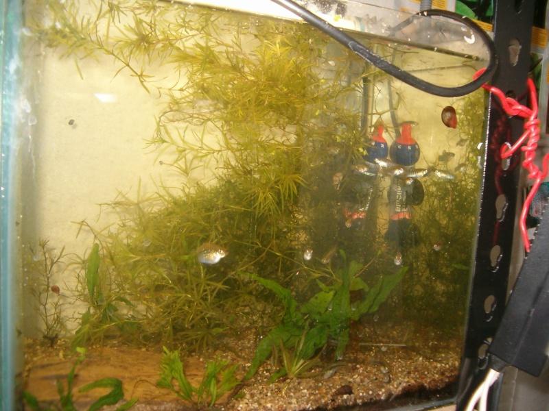 Fishroom de jm8021 Hpim9210