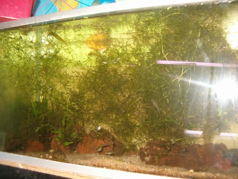 Fishroom de jm8021 Hpim9212
