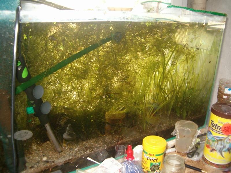 Fishroom de jm8021 Hpim9215