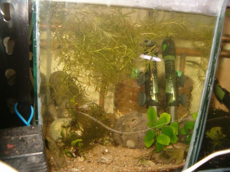 Fishroom de jm8021 Hpim9218