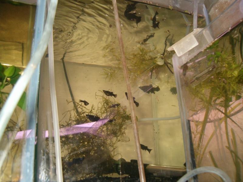 Fishroom de jm8021 Hpim9220