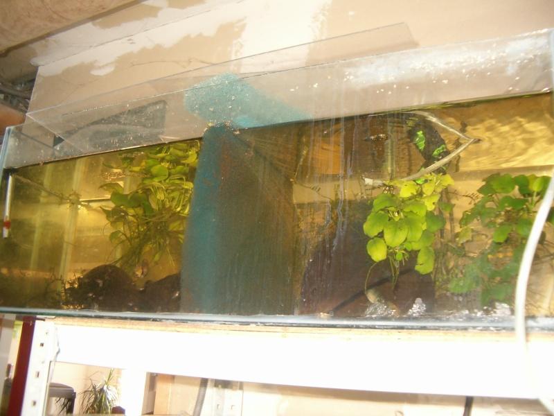 Fishroom de jm8021 Hpim9221