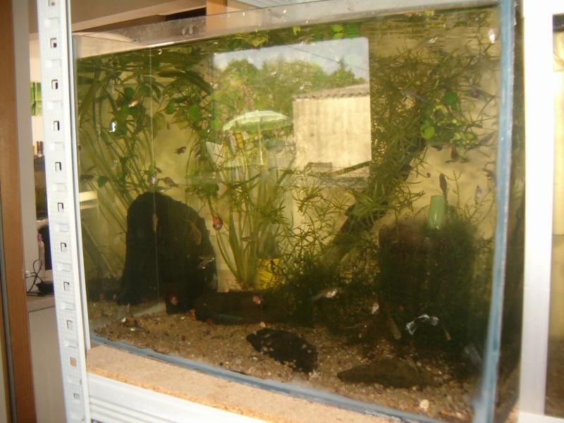 Fishroom de jm8021 Hpim9222
