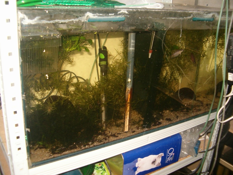 Fishroom de jm8021 Hpim9225