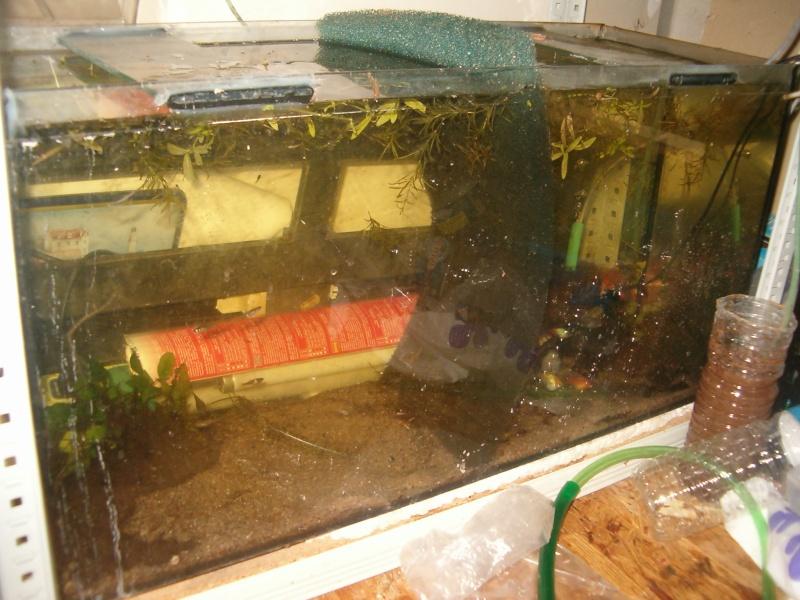 Fishroom de jm8021 Hpim9226