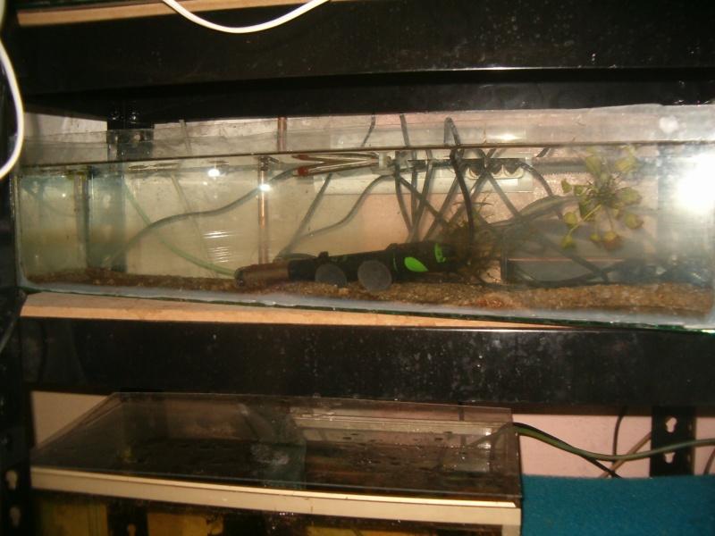 Fishroom de jm8021 Hpim9227