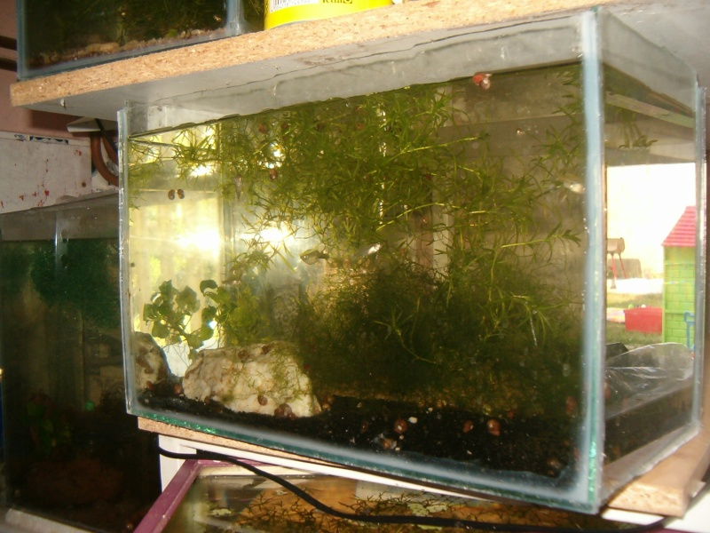 Fishroom de jm8021 Hpim9228
