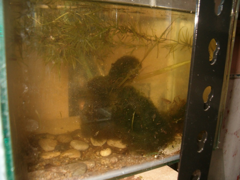 Fishroom de jm8021 Hpim9233