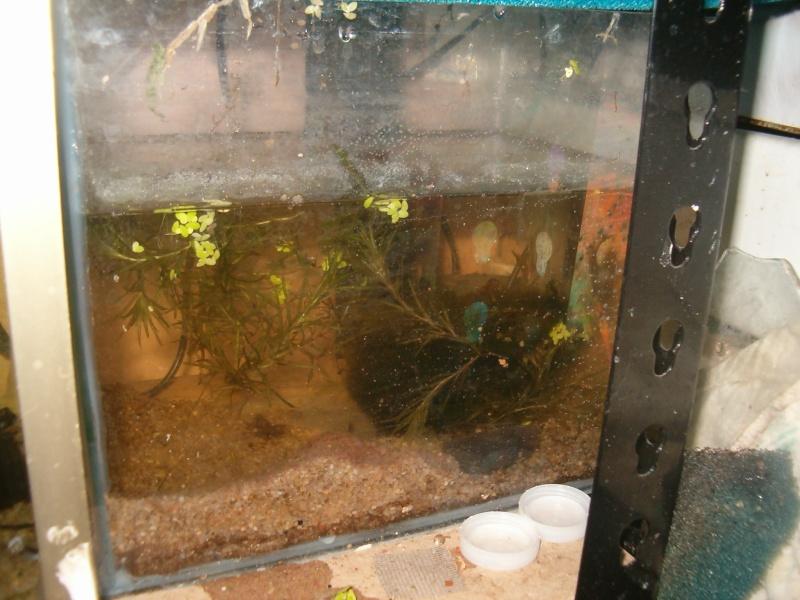 Fishroom de jm8021 Hpim9234