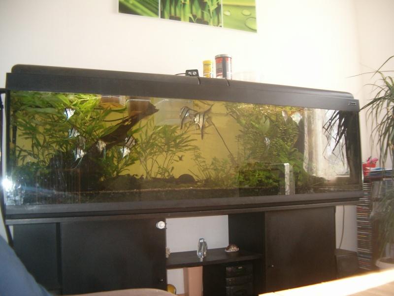Fishroom de jm8021 Hpim9235