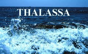 THALASSA (La Route du Rhum édition 2010) - Page 2 Images11