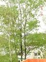 c'est quel sorte d'arbre? 1_01010
