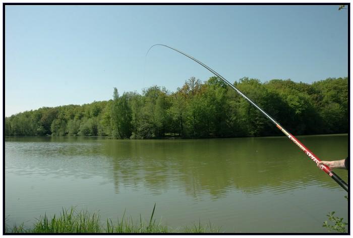 Je pêche la carpe à la baguette. Fab_ca10