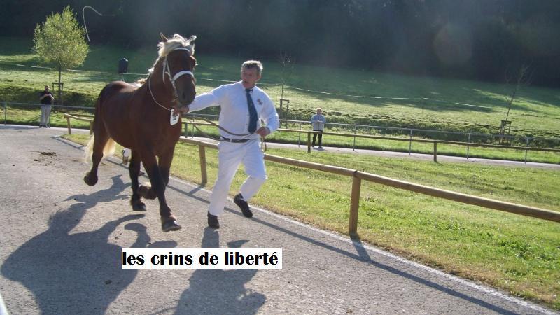 Dpt 39, Bueno de l'Heute, Comtois PP, sauvé par Ann Crowe !!! ANGLETERRE (2011) - Page 3 100_0910