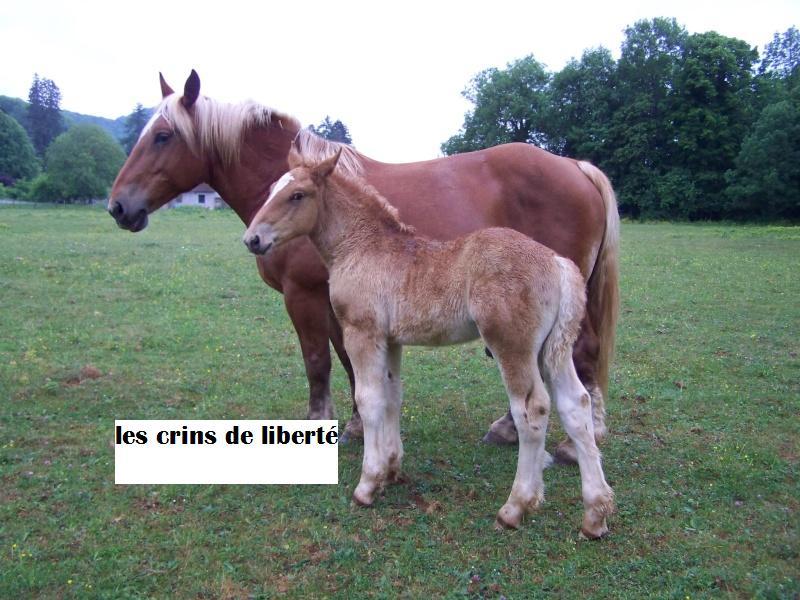 Dpt 39, Bueno de l'Heute, Comtois PP, sauvé par Ann Crowe !!! ANGLETERRE (2011) - Page 3 100_3210