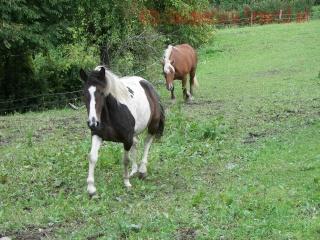 QUERELLE  - Trait Comtois née en 2004 - adoptée en septembre 2010 par teignou39 - Page 3 101_0211
