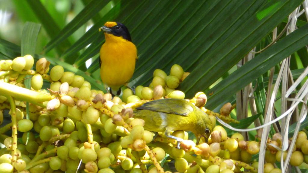 les visiteurs à plumes sauvages - 3 - Page 5 P1020111