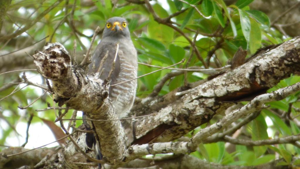 les visiteurs à plumes sauvages - 3 - Page 5 P1020610
