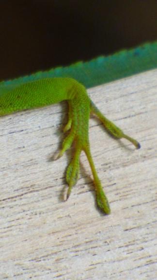 lézards et autres reptiles - Page 7 P1050110