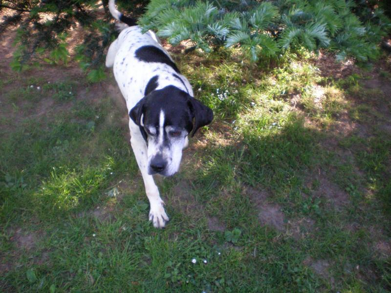 Nouvelles des chiens partis le 13 Mai 14_05_13