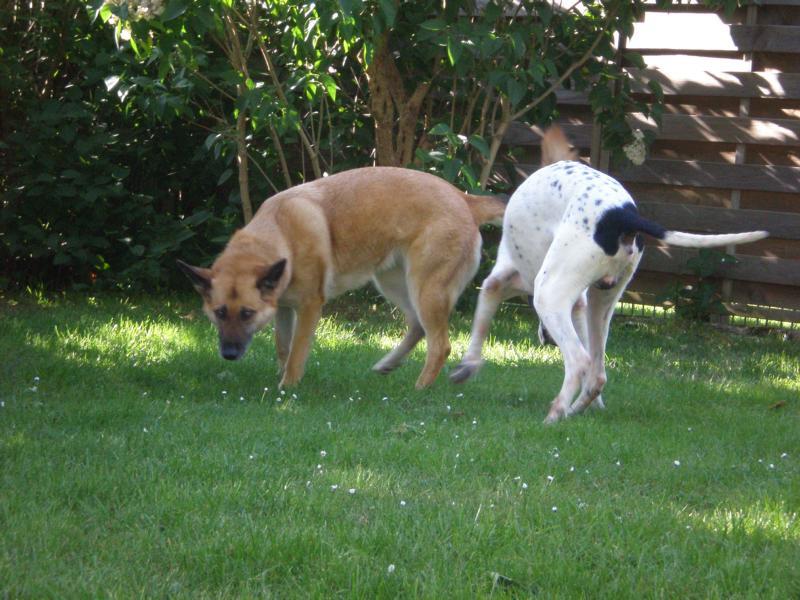 Nouvelles des chiens partis le 13 Mai 14_05_14
