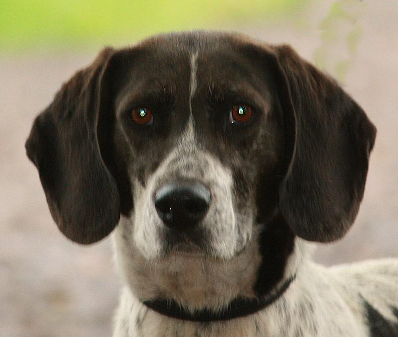 Nouvelles des chiens partis le 13 Mai Att310