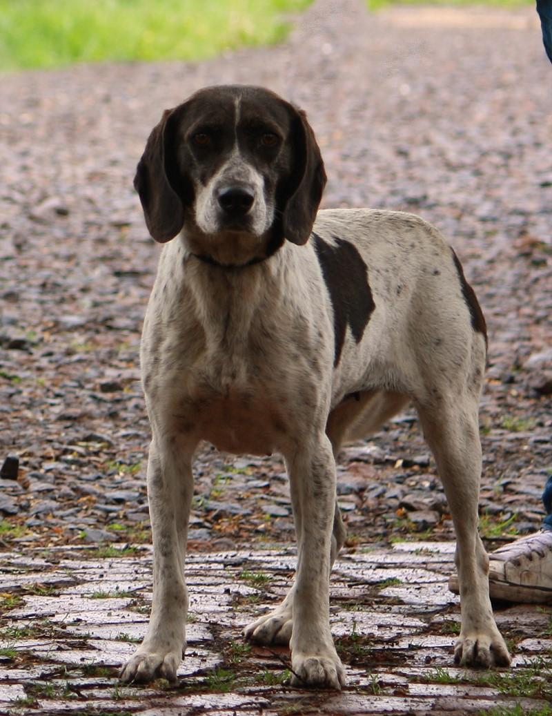Nouvelles des chiens partis le 13 Mai Att410