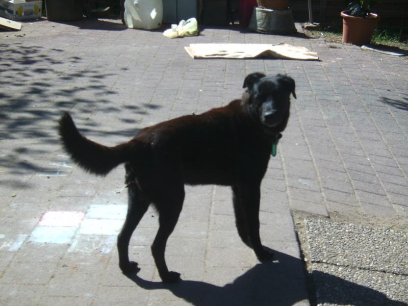 Nouvelles des chiens partis le 9 mai pour l'allemagne et l'autriche Bounty10