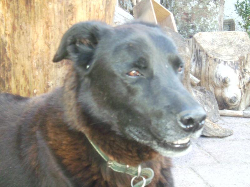 Nouvelles des chiens partis le 9 mai pour l'allemagne et l'autriche Bounty13