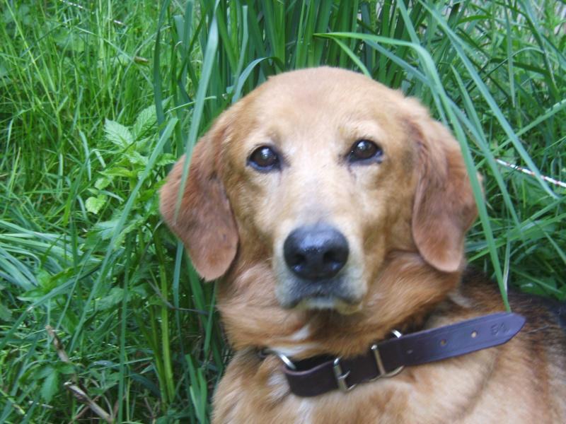 Nouvelles des chiens partis le 9 mai pour l'allemagne et l'autriche Budy_010