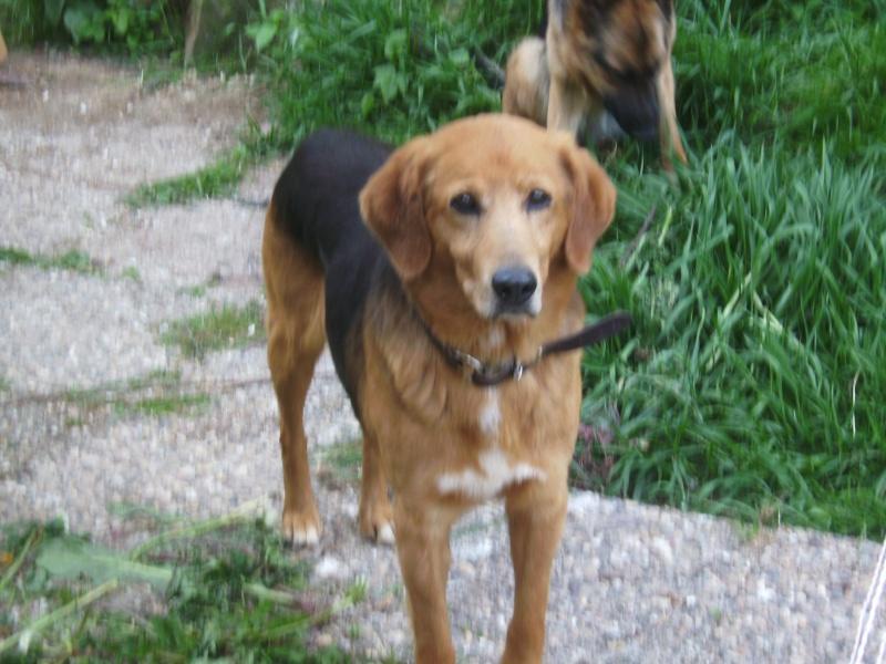 Nouvelles des chiens partis le 9 mai pour l'allemagne et l'autriche Budy_011