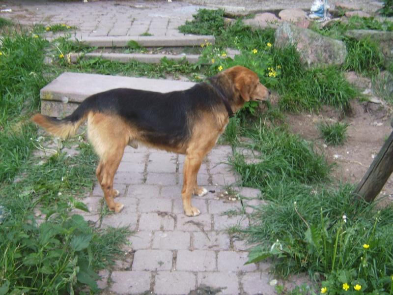 Nouvelles des chiens partis le 9 mai pour l'allemagne et l'autriche Budy_012