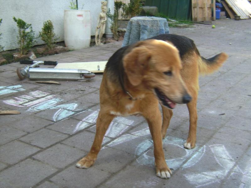 Nouvelles des chiens partis le 9 mai pour l'allemagne et l'autriche Budy_014