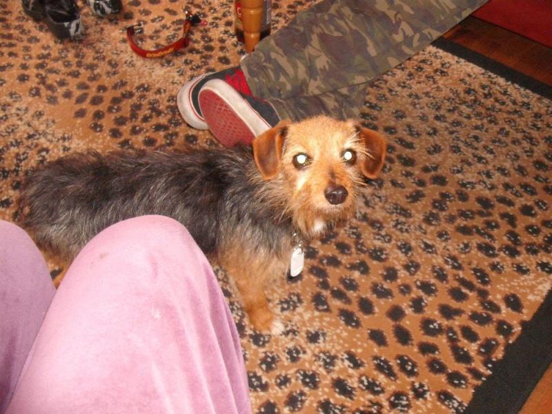 Nouvelles des chiens partis le 25 juin pour l'Allemagne Choups13