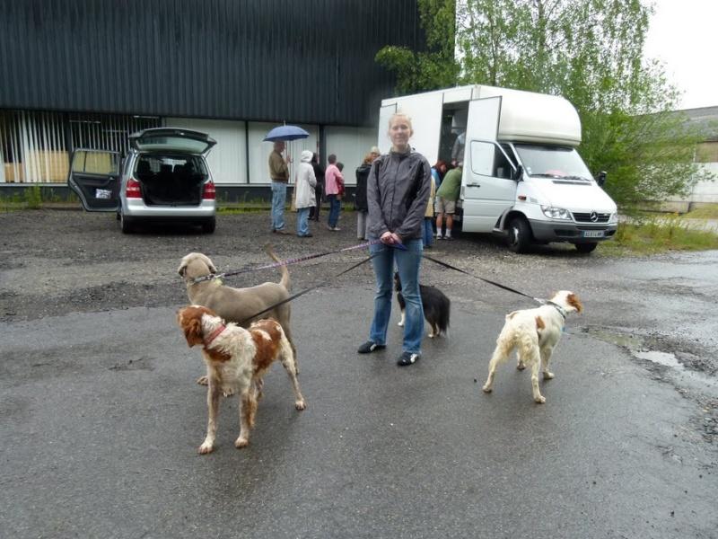 Nouvelles des chiens partis le 25 juin pour l'Allemagne Co-voi10
