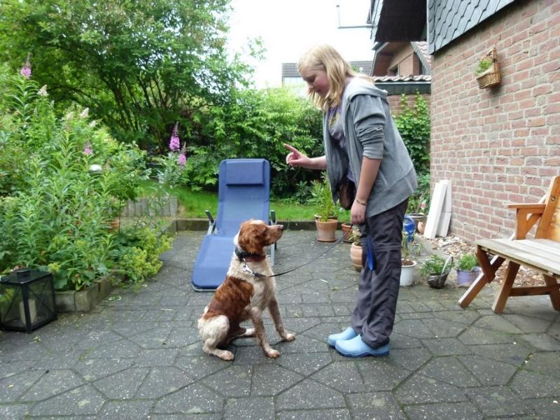 Nouvelles des chiens partis le 25 juin pour l'Allemagne Co-voi11