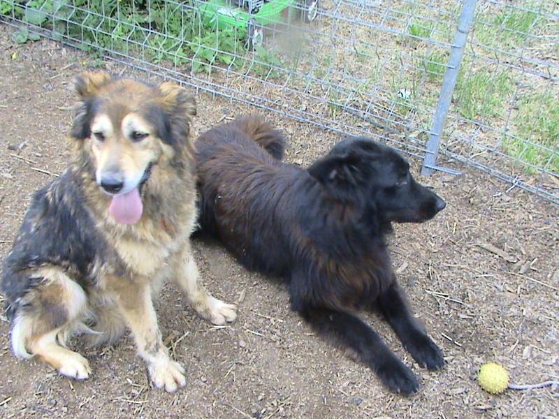 Nouvelles des chiens partis le 13 Mai pour les Pays Bas et l'Allemagne Dsc00110