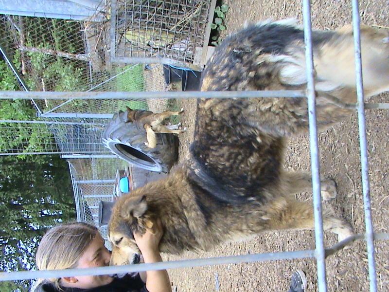 Nouvelles des chiens partis le 13 Mai pour les Pays Bas et l'Allemagne Dsc00114