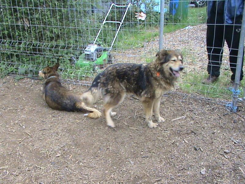 Nouvelles des chiens partis le 13 Mai pour les Pays Bas et l'Allemagne Dsc00115