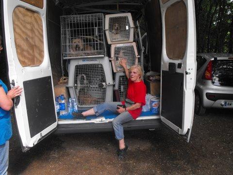 Nouvelles des chiens partis le 9 mai pour l'allemagne et l'autriche Dscf2717