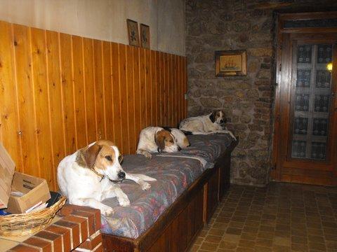 Nouvelles des chiens partis le 9 mai pour l'allemagne et l'autriche Dscf2718