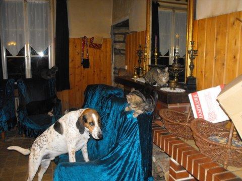 Nouvelles des chiens partis le 9 mai pour l'allemagne et l'autriche Dscf2719