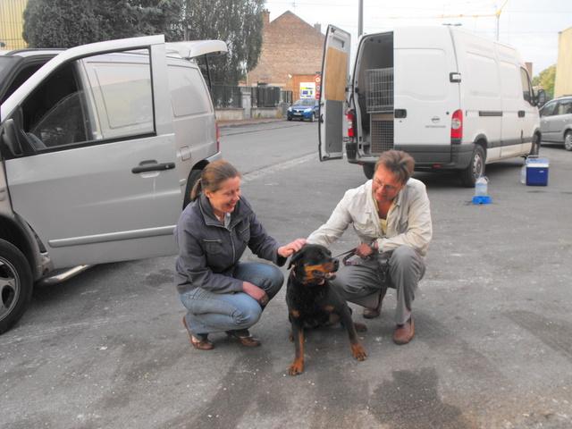 Nouvelles des chiens partis le 13 Mai pour les Pays Bas et l'Allemagne Dscf2723