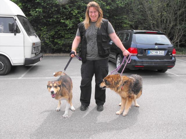Nouvelles des chiens partis le 13 Mai pour les Pays Bas et l'Allemagne Dscf2725