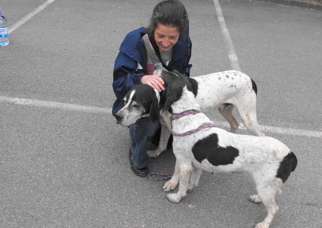 Nouvelles des chiens partis le 13 Mai pour les Pays Bas et l'Allemagne Dscf2727