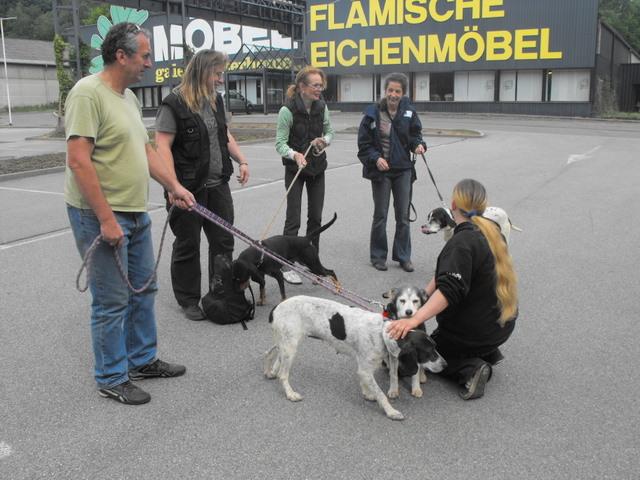 Nouvelles des chiens partis le 13 Mai pour les Pays Bas et l'Allemagne Dscf2730