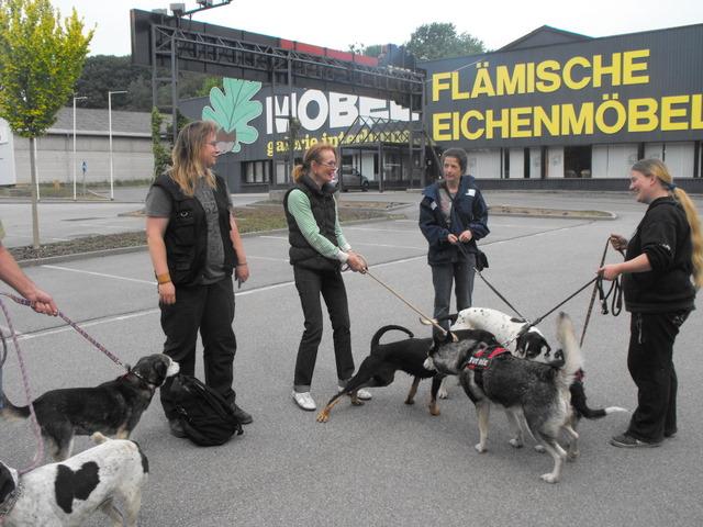 Nouvelles des chiens partis le 13 Mai pour les Pays Bas et l'Allemagne Dscf2731